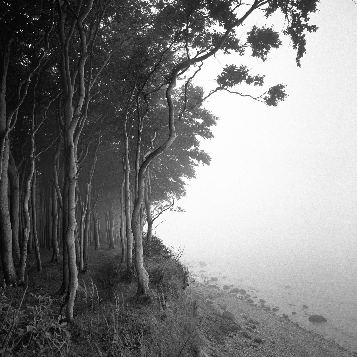 Waldfotografie, Naturfotografie, Landschaftsfotografie, Baumfoto als Fotokunst exklusiv bei der internationalen Galerie Lumas